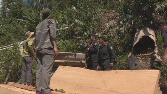 Phát hiện vụ khai thác trái phép gần 200m³ gỗ ảnh 3