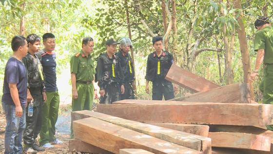 Phát hiện vụ khai thác trái phép gần 200m³ gỗ ảnh 5