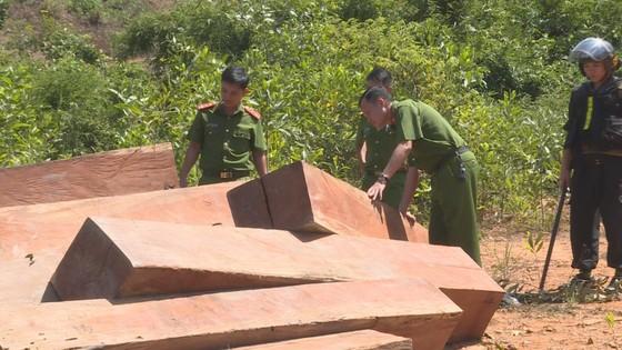 Phát hiện thêm nhiều điểm tập kết gỗ 'khủng' tại Đắk Lắk ảnh 1