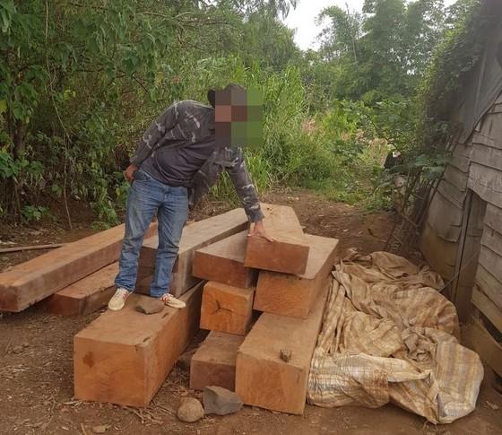 Phát hiện thêm nhiều điểm tập kết gỗ 'khủng' tại Đắk Lắk ảnh 5