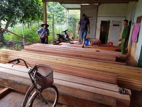 Phát hiện thêm nhiều điểm tập kết gỗ 'khủng' tại Đắk Lắk ảnh 6