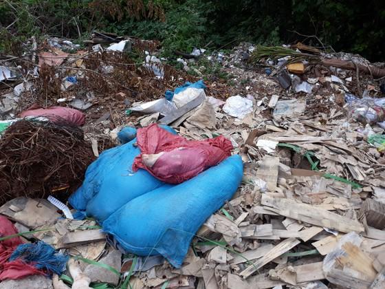 Nhiều xác heo nghi nhiễm dịch tả heo châu Phi bị vứt trên đường ảnh 1