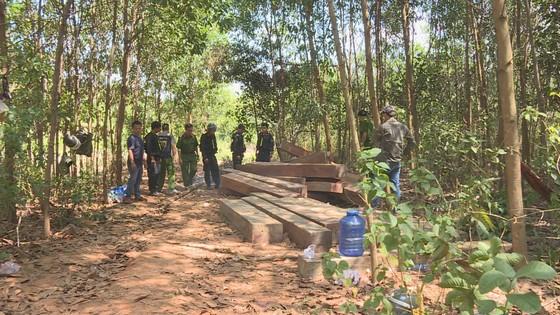 Xem xét kỷ luật giám đốc công ty lâm nghiệp để mất rừng ảnh 2