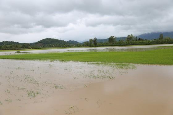 Đắk Lắk: Mưa lớn, hàng trăm nhà dân, hoa màu bị nhấn chìm ảnh 12