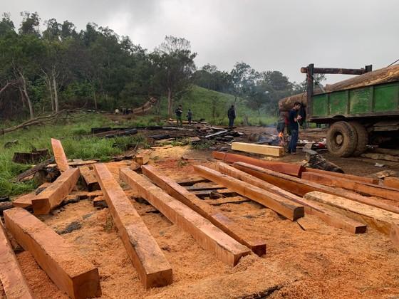 Phát hiện vụ phá rừng quy mô lớn tại rừng giáp ranh Đắk Lắk – Khánh Hòa ảnh 2
