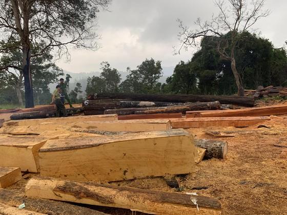 Phát hiện vụ phá rừng quy mô lớn tại rừng giáp ranh Đắk Lắk – Khánh Hòa ảnh 1