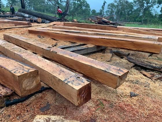 Phát hiện vụ phá rừng quy mô lớn tại rừng giáp ranh Đắk Lắk – Khánh Hòa ảnh 3