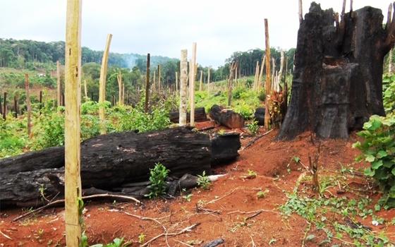 Nhiều chủ rừng khai khống diện tích để trục lợi hàng tỷ đồng ảnh 1