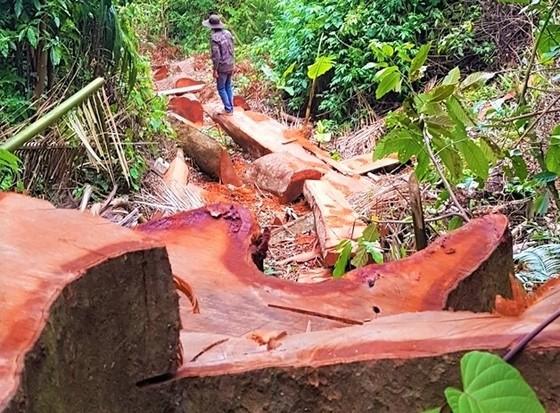 Bắt Trạm trưởng Trạm Kiểm lâm nhận 35 triệu đồng để lâm tặc phá rừng ảnh 1