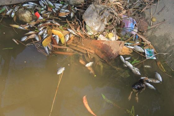 Kinh hoàng cảnh cá chết trắng kênh thủy lợi, nghi nhiễm độc thuốc diệt cỏ ảnh 2