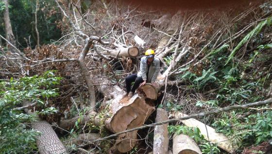 Kiểm điểm 3 kiểm lâm vì để mất rừng ảnh 1