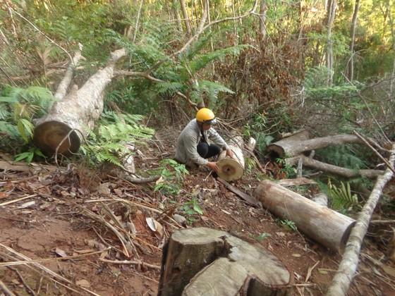 Kiểm điểm 3 kiểm lâm vì để mất rừng ảnh 2