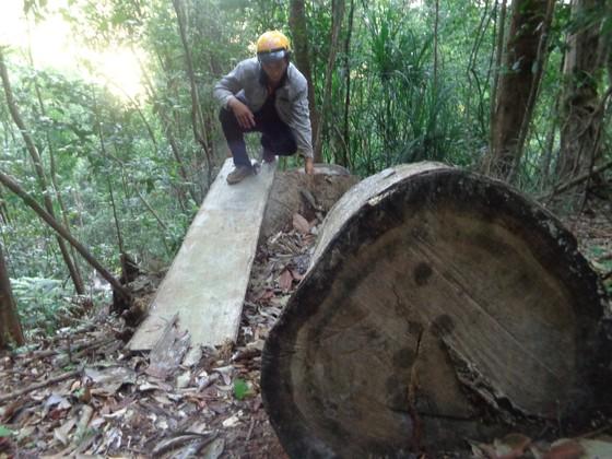 Kiểm điểm 3 kiểm lâm vì để mất rừng ảnh 4
