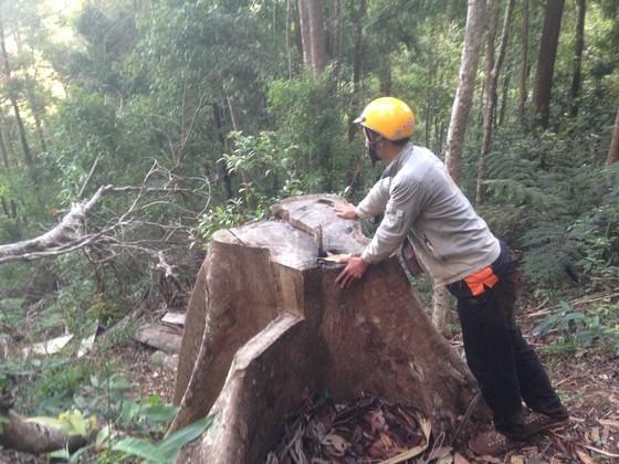 Kiểm điểm 3 kiểm lâm vì để mất rừng ảnh 5
