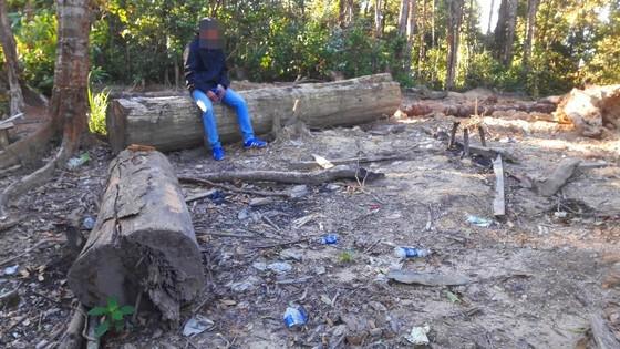 """Vụ đột nhập """"công trường"""" gỗ lậu: Truy tìm người và phương tiện khai thác 7,6m³ gỗ vô chủ ảnh 15"""
