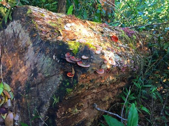 """Vụ đột nhập """"công trường"""" gỗ lậu: Truy tìm người và phương tiện khai thác 7,6m³ gỗ vô chủ ảnh 16"""
