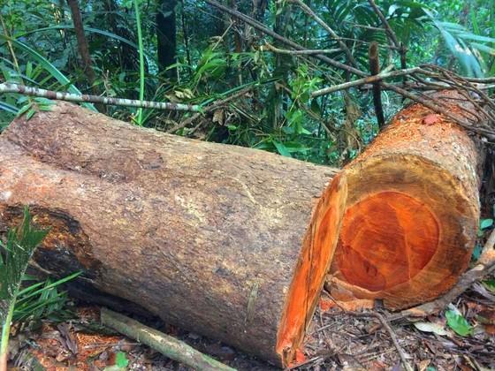 Công an vào cuộc vụ phá rừng Chư Pah ảnh 1