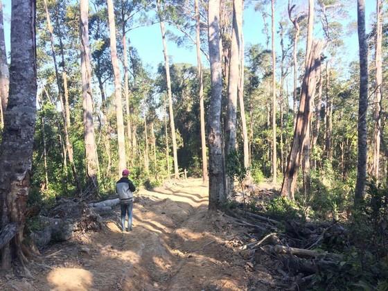 Công an vào cuộc vụ phá rừng Chư Pah ảnh 8
