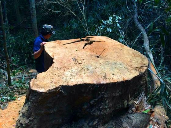 Công an vào cuộc vụ phá rừng Chư Pah ảnh 2