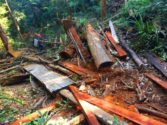 Công an vào cuộc vụ phá rừng Chư Pah ảnh 3