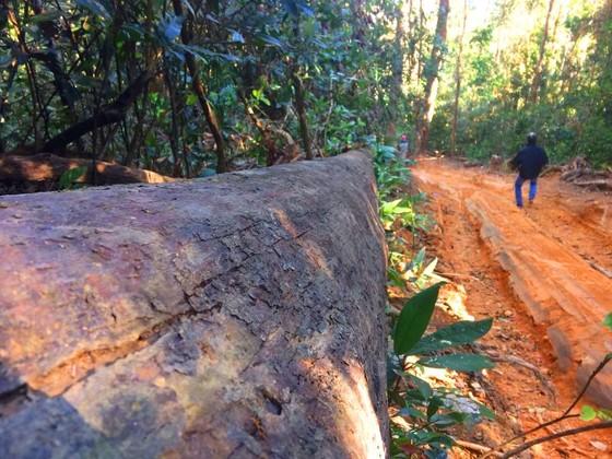 Công an vào cuộc vụ phá rừng Chư Pah ảnh 4