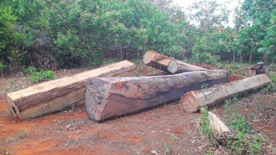Phát hiện gỗ lậu giấu dưới lòng hồ thủy điện Sê San 3A ảnh 1