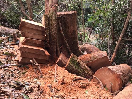 Kon Tum: Phá rừng ở nơi… cấm phá ảnh 1
