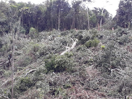 Kon Tum: Phá rừng ở nơi… cấm phá ảnh 3