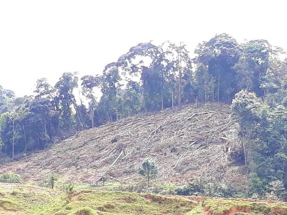 Kon Tum: Phá rừng ở nơi… cấm phá ảnh 4
