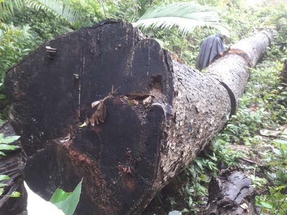 Khiển trách 2 kiểm lâm, cảnh cáo 3 viên chức công ty lâm nghiệp vì để mất rừng ảnh 1