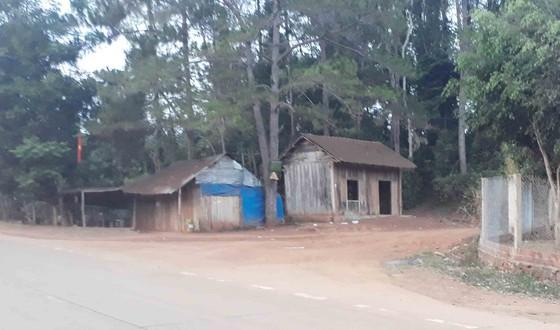 Khiển trách 2 kiểm lâm, cảnh cáo 3 viên chức công ty lâm nghiệp vì để mất rừng ảnh 5