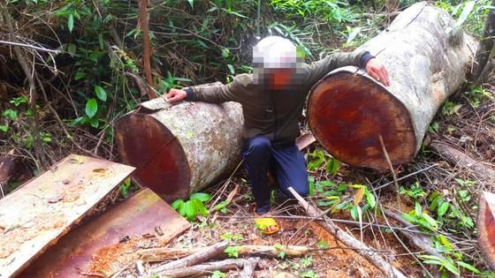Khiển trách 2 kiểm lâm, cảnh cáo 3 viên chức công ty lâm nghiệp vì để mất rừng ảnh 4