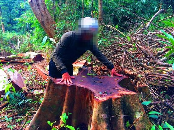 Khiển trách 2 kiểm lâm, cảnh cáo 3 viên chức công ty lâm nghiệp vì để mất rừng ảnh 2