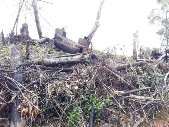Cận cảnh rừng Kon Plông bị phá nát ảnh 11
