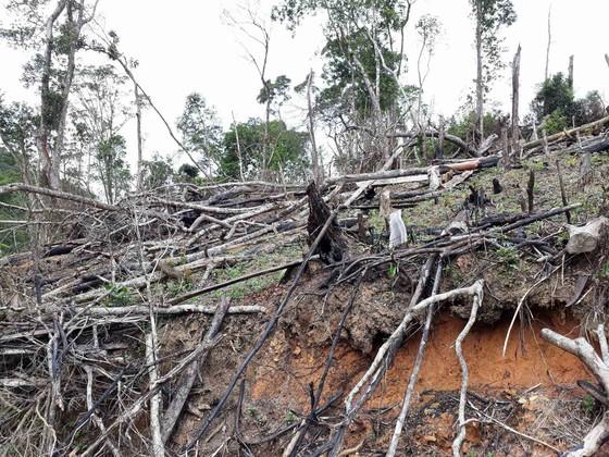 Cận cảnh rừng Kon Plông bị phá nát ảnh 13