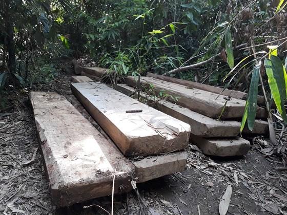 Vụ đột nhập bãi tập kết gỗ lậu ở xã biên giới: Gỗ tập kết vốn là gỗ vi phạm đã lập biên bản ảnh 2
