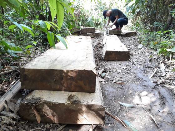 Vụ đột nhập bãi tập kết gỗ lậu ở xã biên giới: Gỗ tập kết vốn là gỗ vi phạm đã lập biên bản ảnh 1