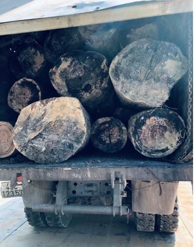 Kon Tum: Bắt 3 xe tải chở gỗ đang giấu trên sà lan chờ tẩu tán  ảnh 1