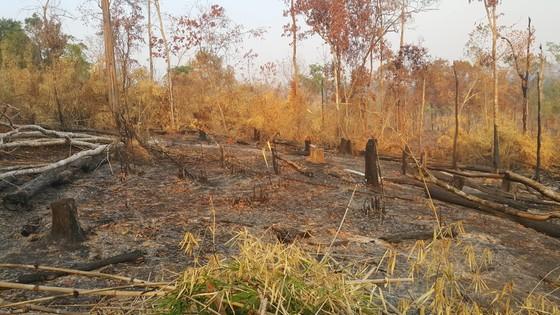 Khởi tố vụ phá gần 5ha rừng tại Gia Lai ảnh 1