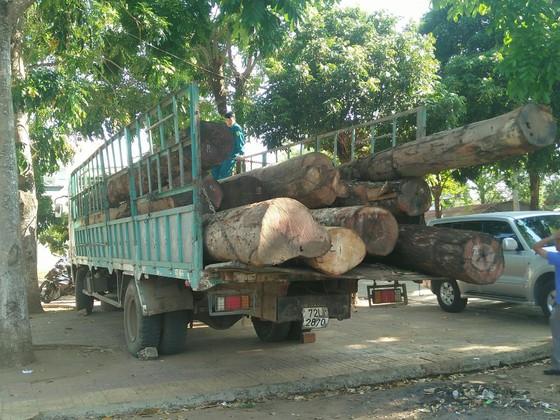 Kon Tum: Bắt vụ vận chuyển hơn 11m³ gỗ lậu   ảnh 1