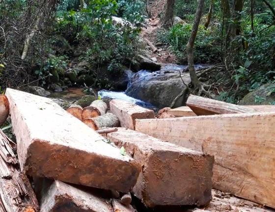 Kon Tum: Rừng già bị tàn phá, gỗ tập kết la liệt ảnh 1