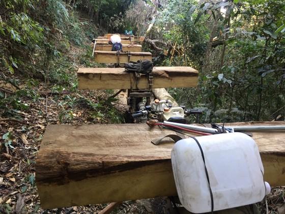 Mở rộng điều tra vụ nhóm lâm tặc vận chuyển gỗ lậu ảnh 1