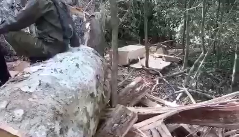 Mở rộng điều tra vụ nhóm lâm tặc vận chuyển gỗ lậu ảnh 2