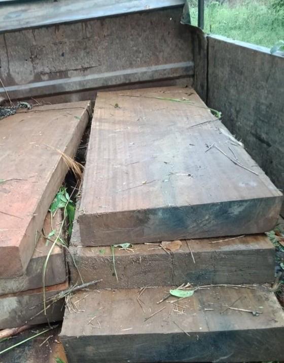 Kon Tum: Khởi tố vụ cưa hạ gỗ dổi cổ thụ   ảnh 2