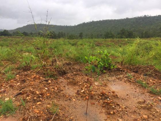 Khởi tố vụ hủy hoại gần 12ha rừng ở Gia Lai ảnh 1