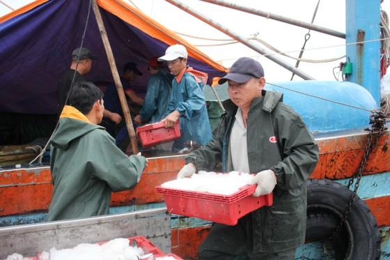 Phát hiện 767 vụ vi phạm liên quan đến khu bảo tồn biển Việt Nam ảnh 2