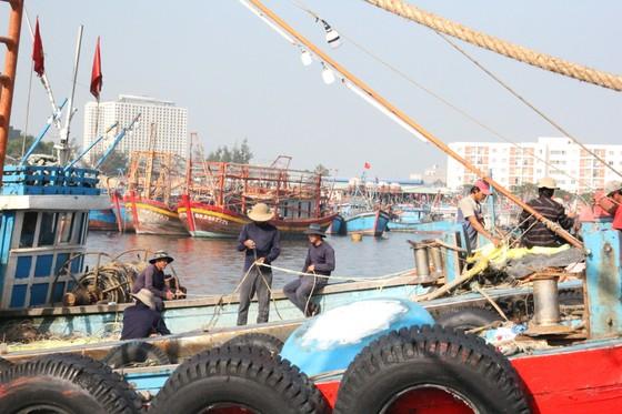 Chi hơn 27 tỷ đồng xóa ô nhiễm tại âu thuyền Thọ Quang, Đà Nẵng ảnh 2