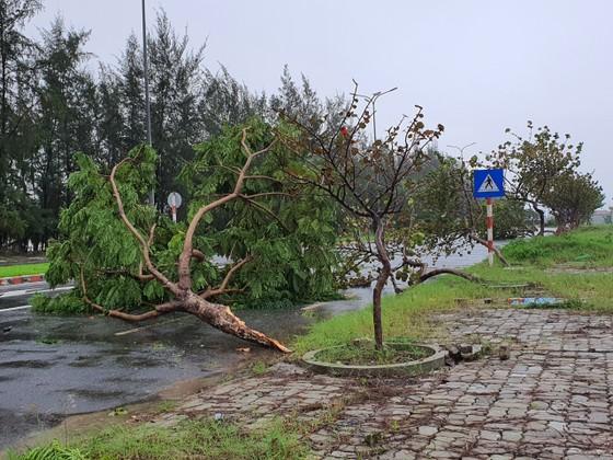 Quảng Bình mưa trắng trời, Huế cây cối ngã đổ ảnh 20