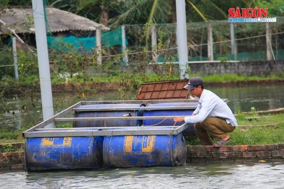 Đà Nẵng: Nông dân làm giàu nhờ nuôi cá phục vụ du lịch sinh thái ảnh 4