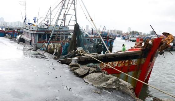 Các tỉnh miền Trung khẩn trương ứng phó bão số 5 đổ bộ  ảnh 14